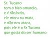 tucano-poema-leticia-cabral