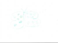 borboleta-eduarda-8