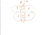 borboleta-julia-7