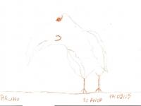 tucano-bruno-10